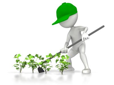 Gardner hoeing Plants